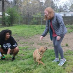 New VIEW members visit local animal shelter for afternoon of service.